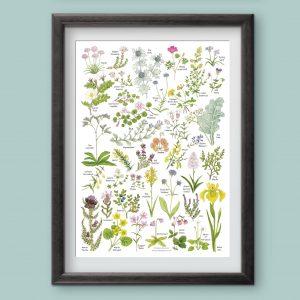 A4-coast-heath-and-bog-wild-flowers