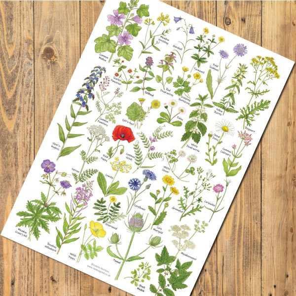 A4-meadow-and-grassland-wild-flowers chart