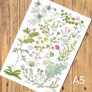 A5-Coastal-Flowers chart