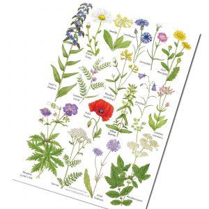 A5-Meadow-Flowers chart