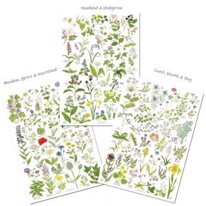 A4 Wildflower charts