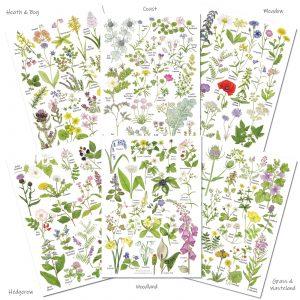 Set of 6 Wild flower charts
