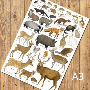 A3-poster-Mammals