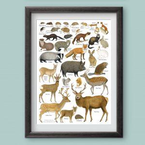 A4 Mammals Chart