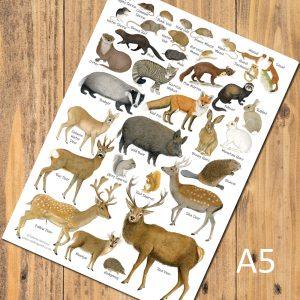 A5 British Mammals Chart