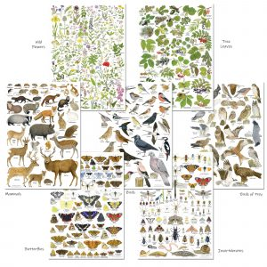 set nature identification posters